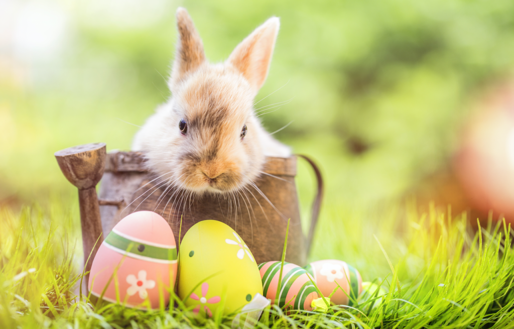 easter-bunny-eggs-texas-egg-hunt-easter-basket-park-place-finance